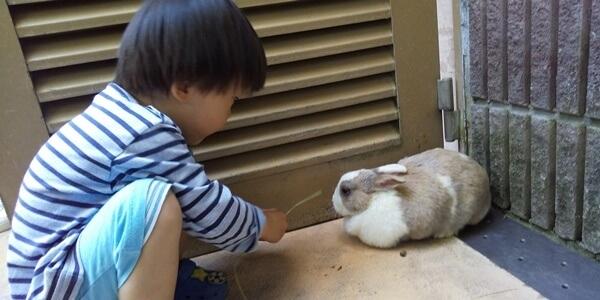 五月山動物園 動物ふれあい ウサギ